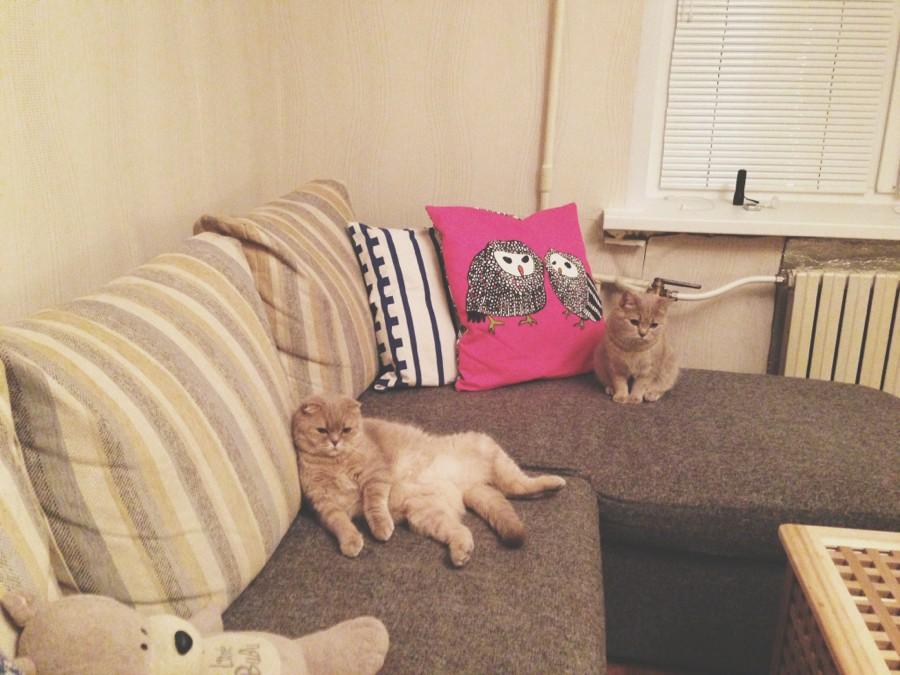 Жизнь замечательных Кошек