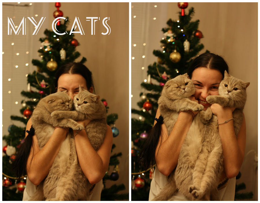 Кошки, две довольные морды