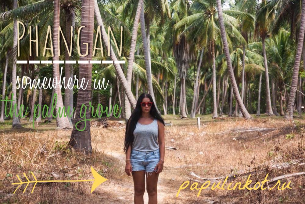 Пальмовая роща на острове Панган
